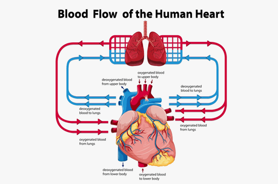 What Is Heart Valve Disease